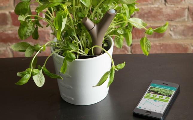 เทคโนโลยี Smart Home-ครื่องตรวจสุขภาพของต้นไม้
